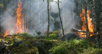 Wildfire Service Providers